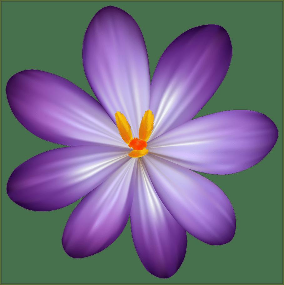 Incredible purple crocus flower. Orchid clipart lavender