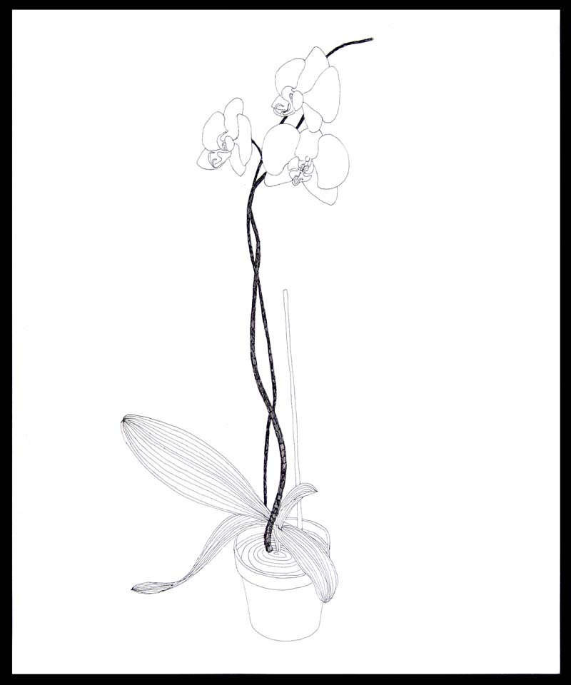 Drawings clip art library. Orchid clipart simple
