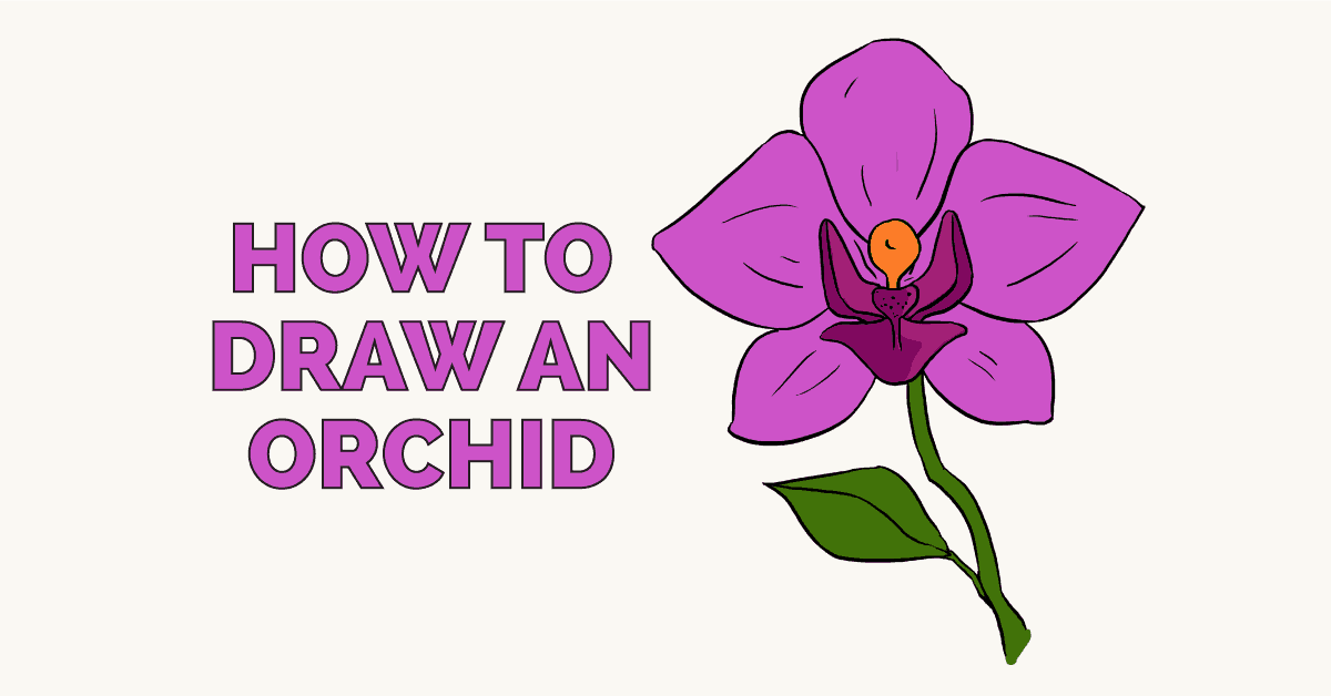 orchid clipart simple