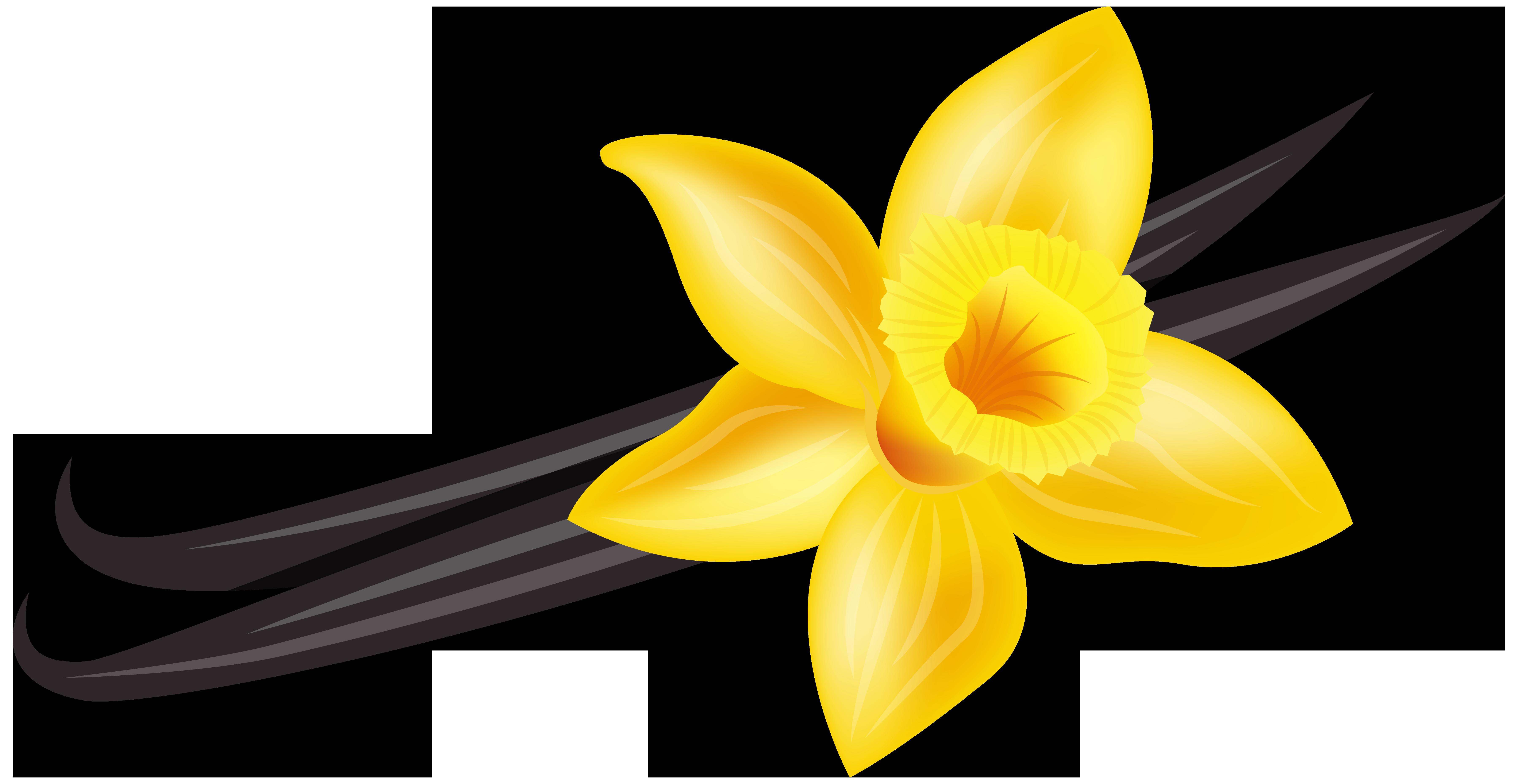 Vanilla flower png. Clip art image gallery