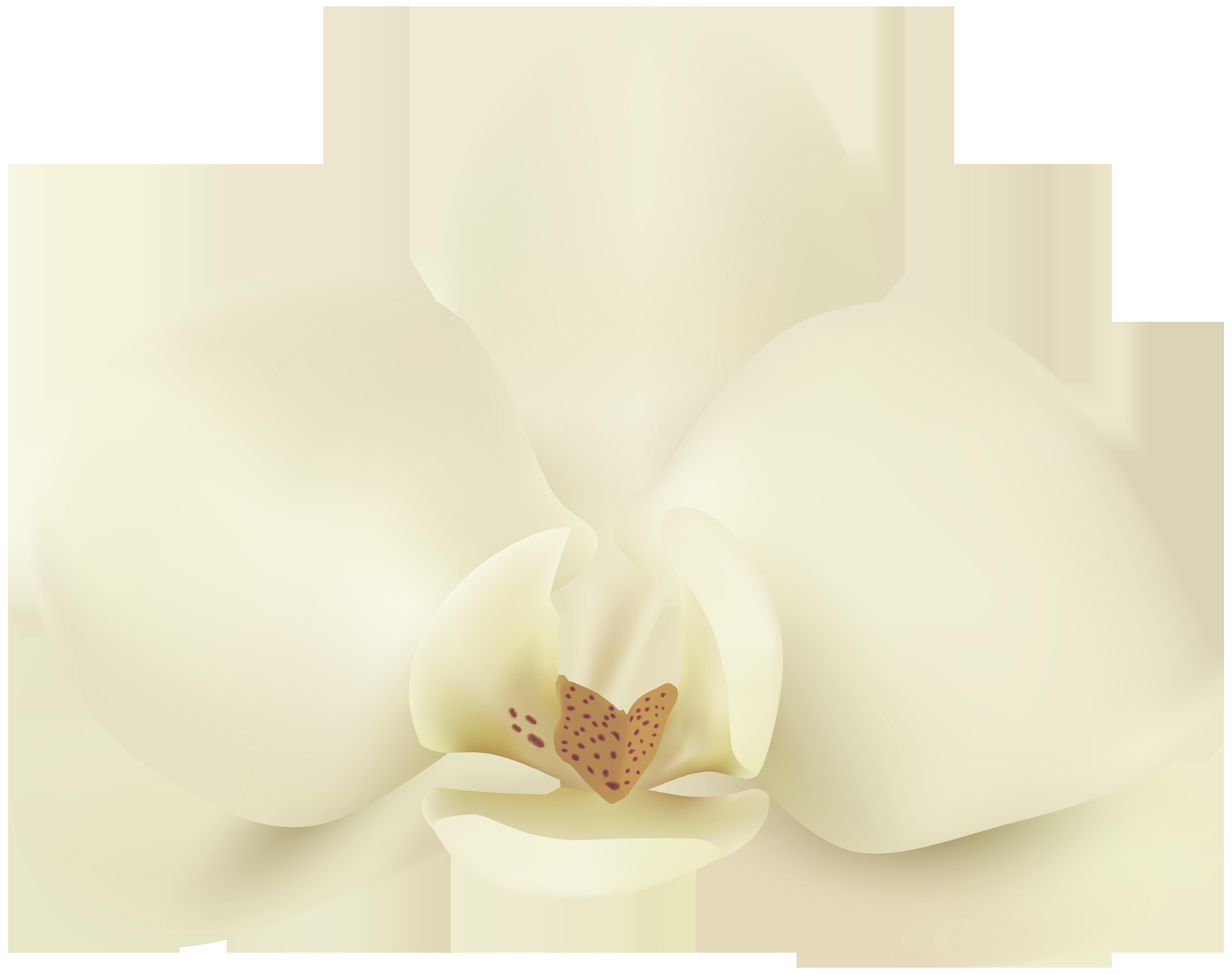 Clip art image gallery. Vanilla flower png