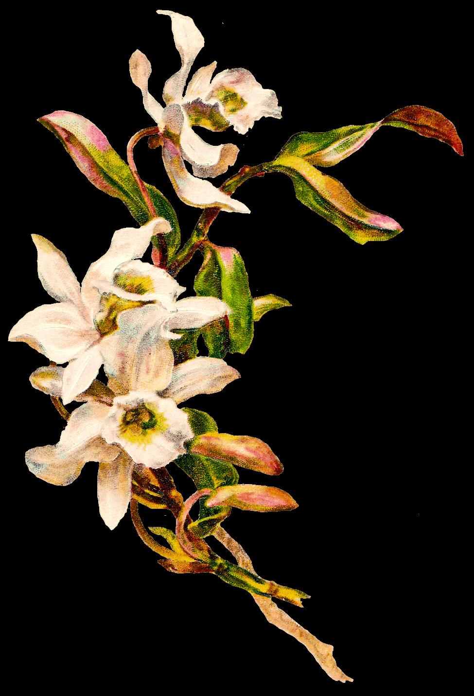 Vintage flower png. Victorian flowers transparent stickpng