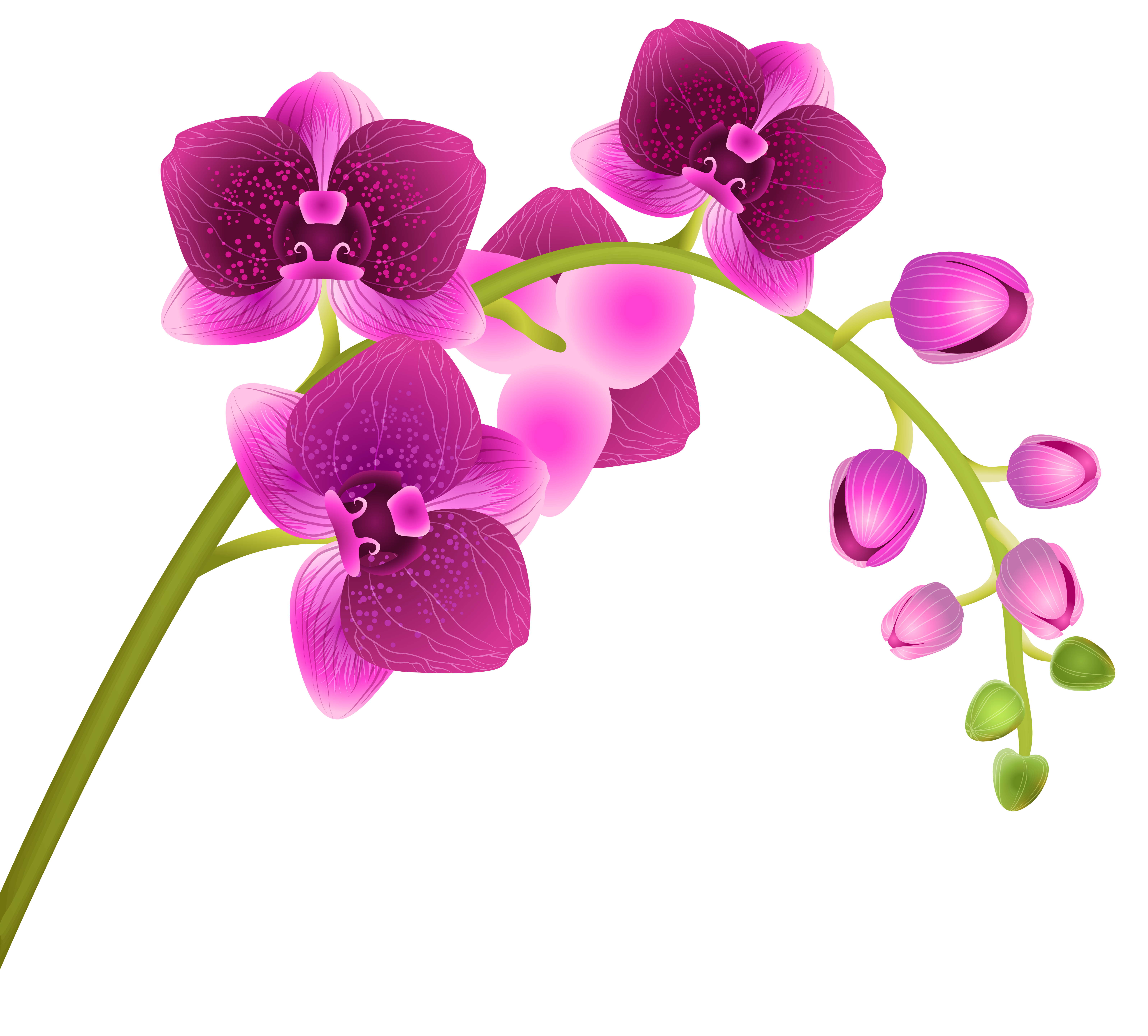 Free cliparts download clip. Orchid clipart