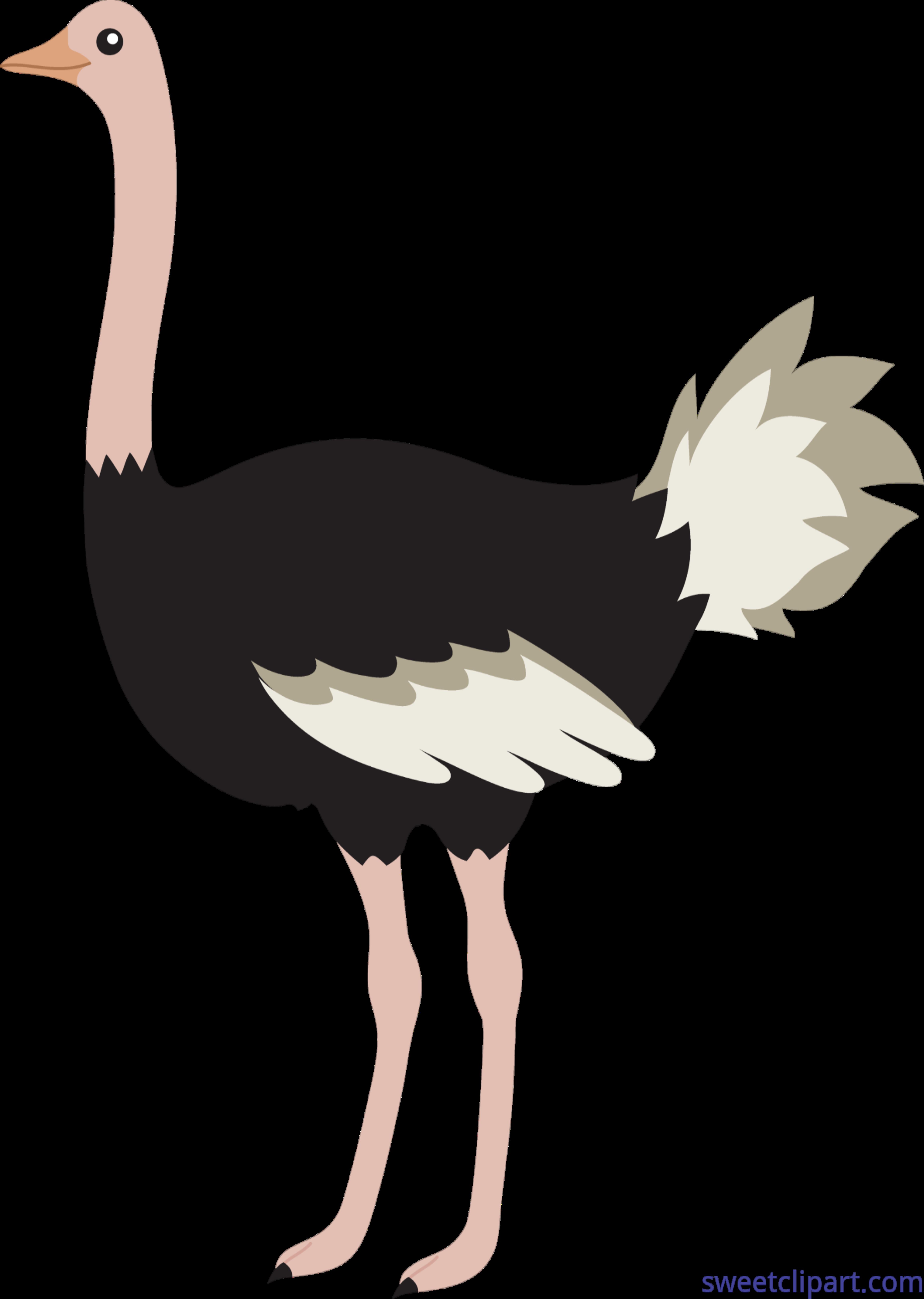 Ostrich clipart. Clip art sweet