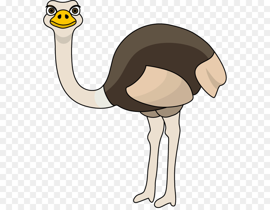 Ostrich clipart. Common clip art png