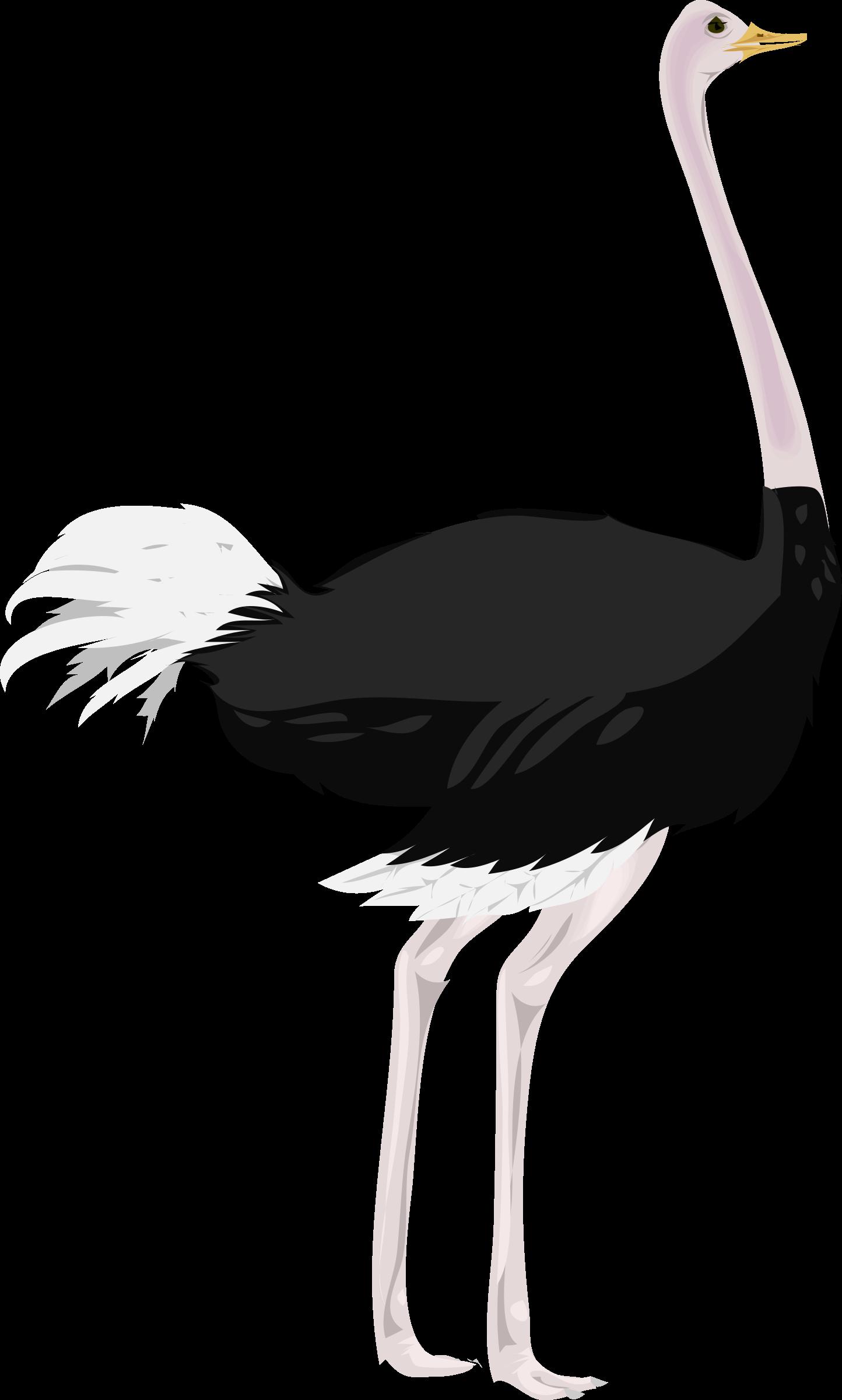 ostrich clipart ostrich bird