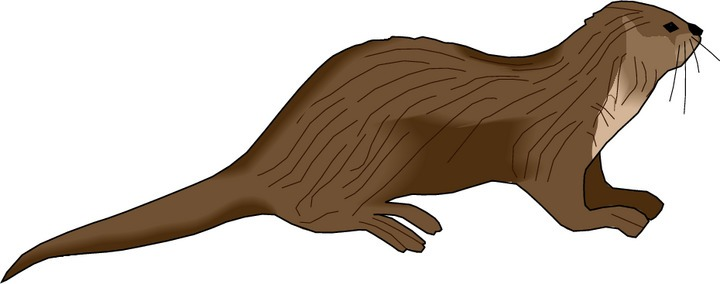 River . Otter clipart