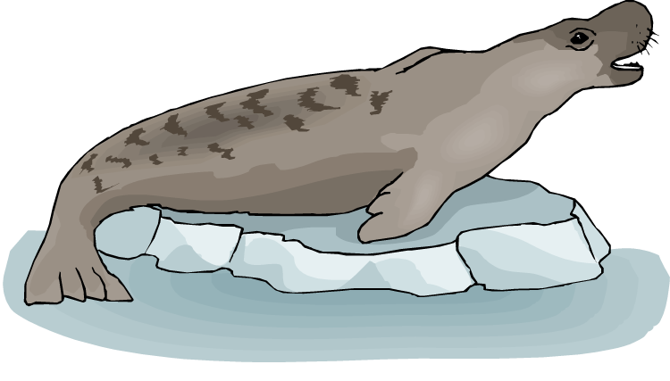Free chatting. Seal clipart sea dog
