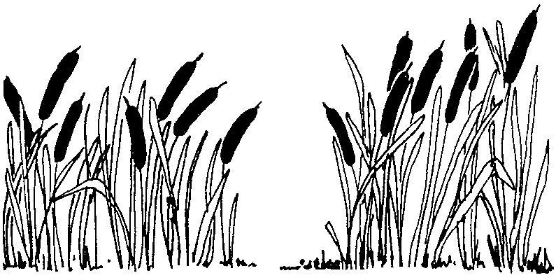 Plants vectors art . Outdoors clipart swamp grass