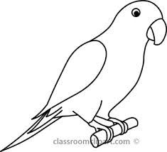 Bird drawing google search. Parrot clipart parrot outline