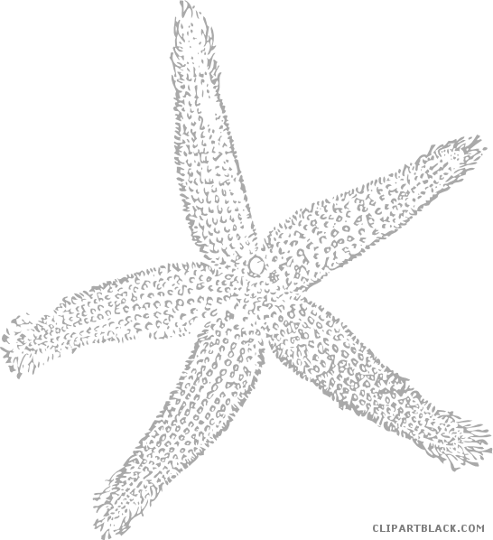 White clipart starfish. Page of clipartblack com