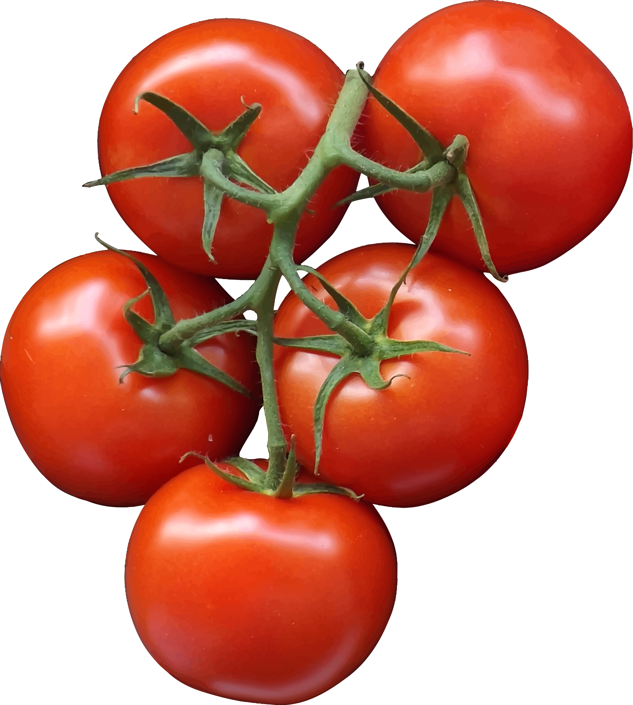 Tomatos transparentpng . Tomatoes clipart happy tomato