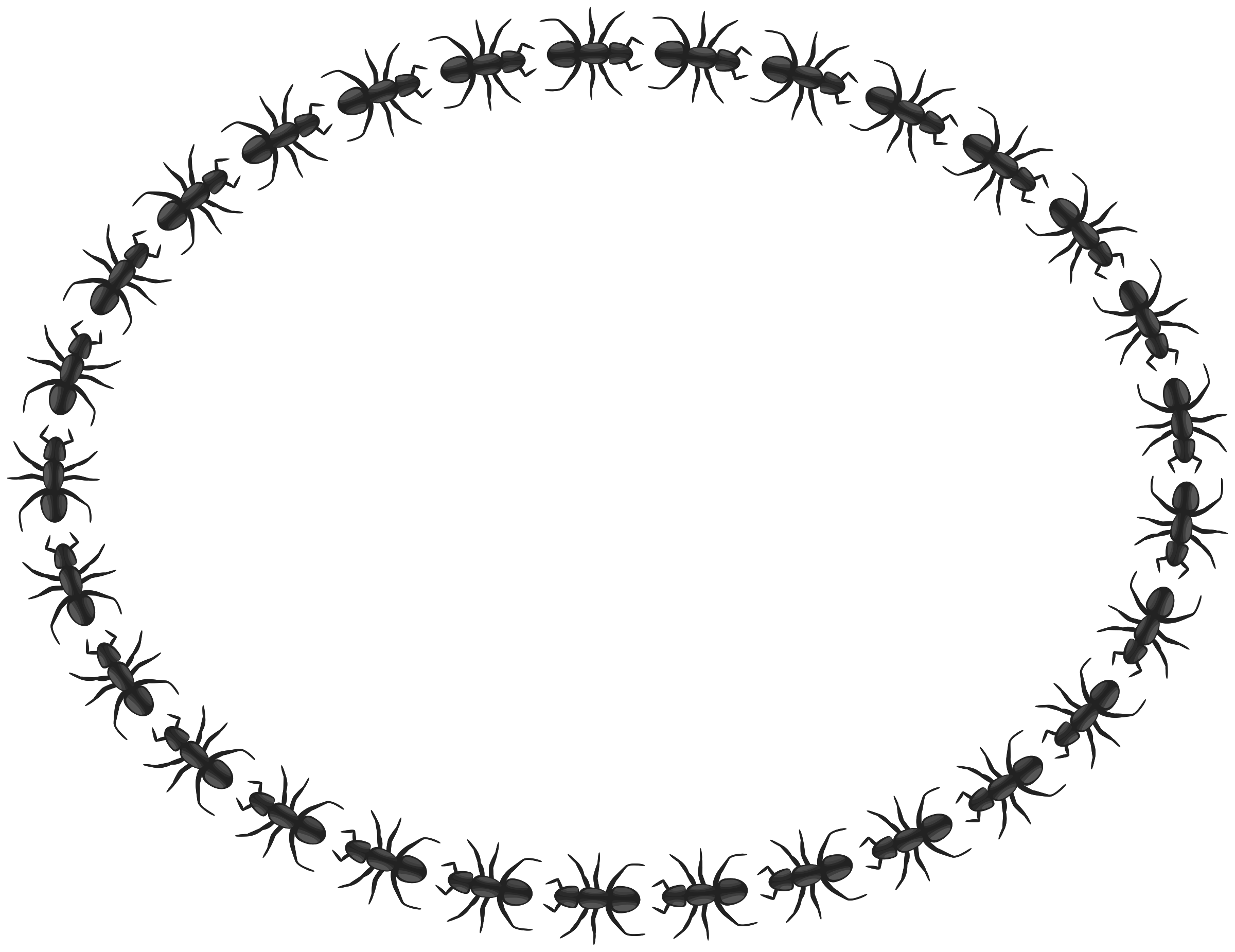 Oval border png. Clipart ant big image