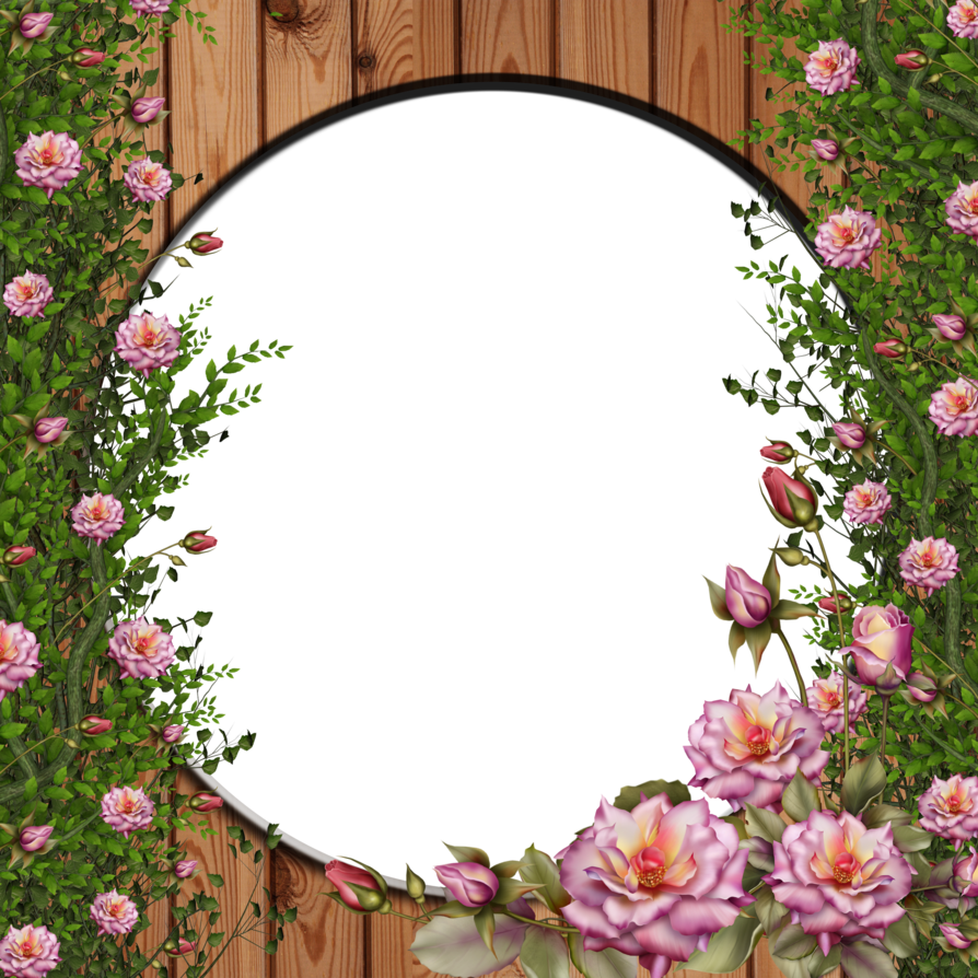 Vines clipart oval. Png rose vine by