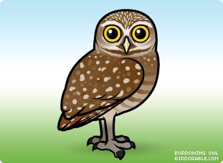 owls clipart burrowing owl