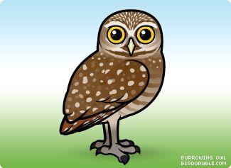 Cute cartoon by birdorable. Owls clipart burrowing owl