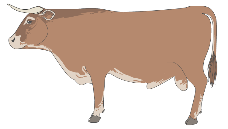 Ox clipart brown bull. Layers