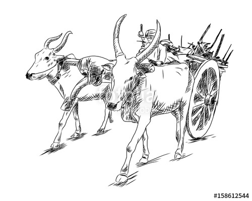 Ox clipart bullock cart. Hand drawn sketch of
