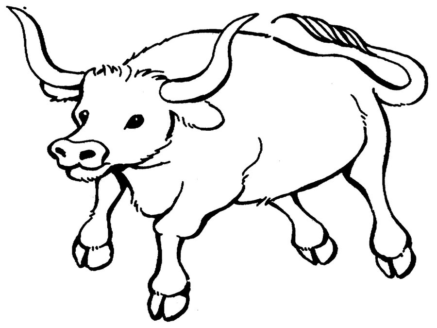 Download bull pages for. Ox clipart coloring page