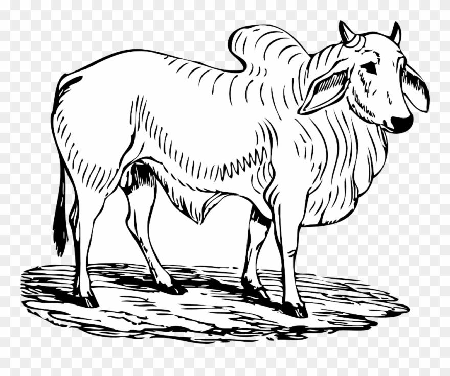 Bull black white line. Ox clipart outline
