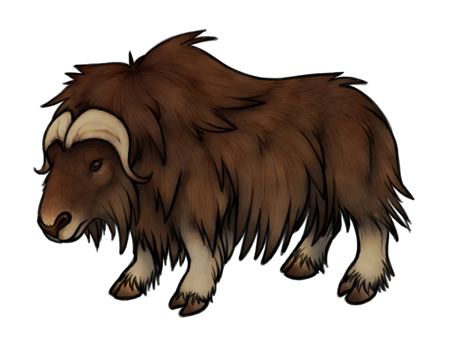 Yak clipart sketches. Musk ox drawing at