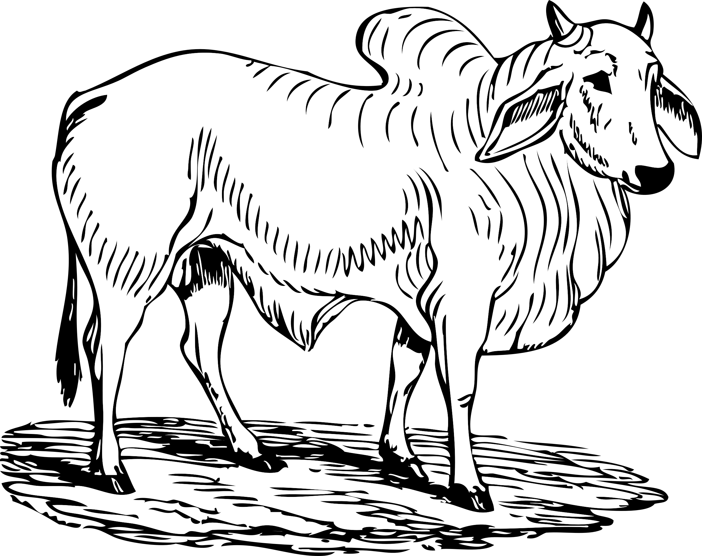 Ox sketch free on. Bull clipart outline