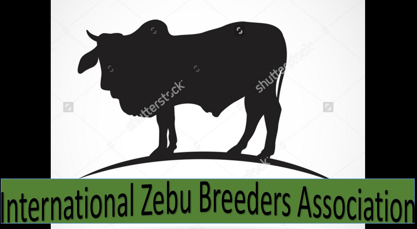 Ox clipart zebu. Izba international breeders association