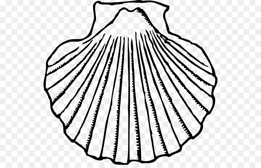Oyster clipart. Clam seashell clip art