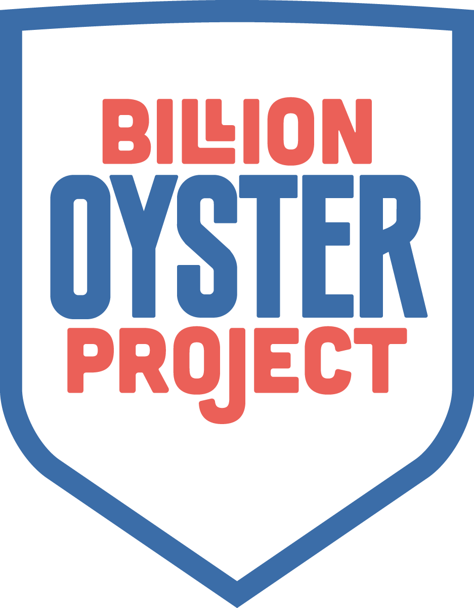 Shell clipart oyster shell. Oysters proud pour billion