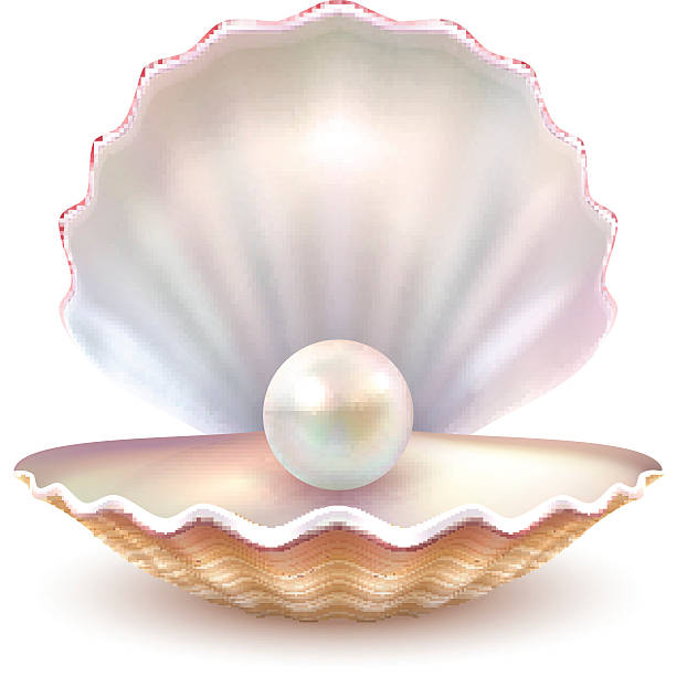 Shell clipart pearl clipart. Oyster with station
