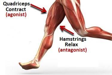 Pain clipart muscle spasm. Foot cramps symptoms treatment