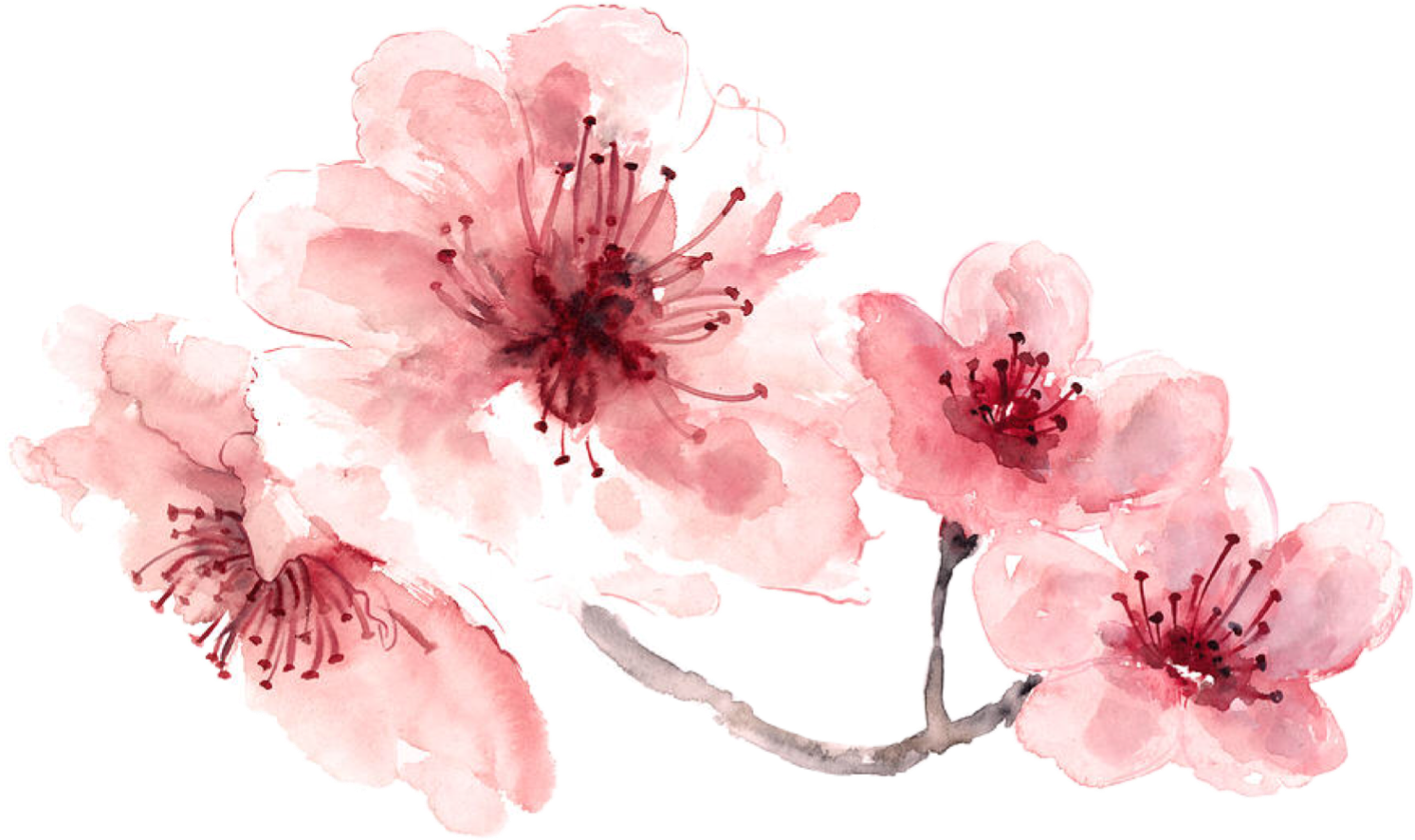 Water color flower png. Watercolor pink painted freetoedit