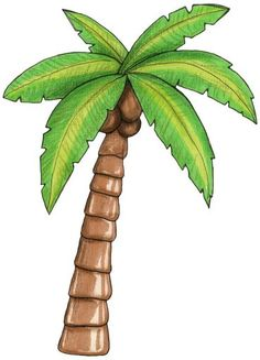 Tree png image graphics. Palm clipart