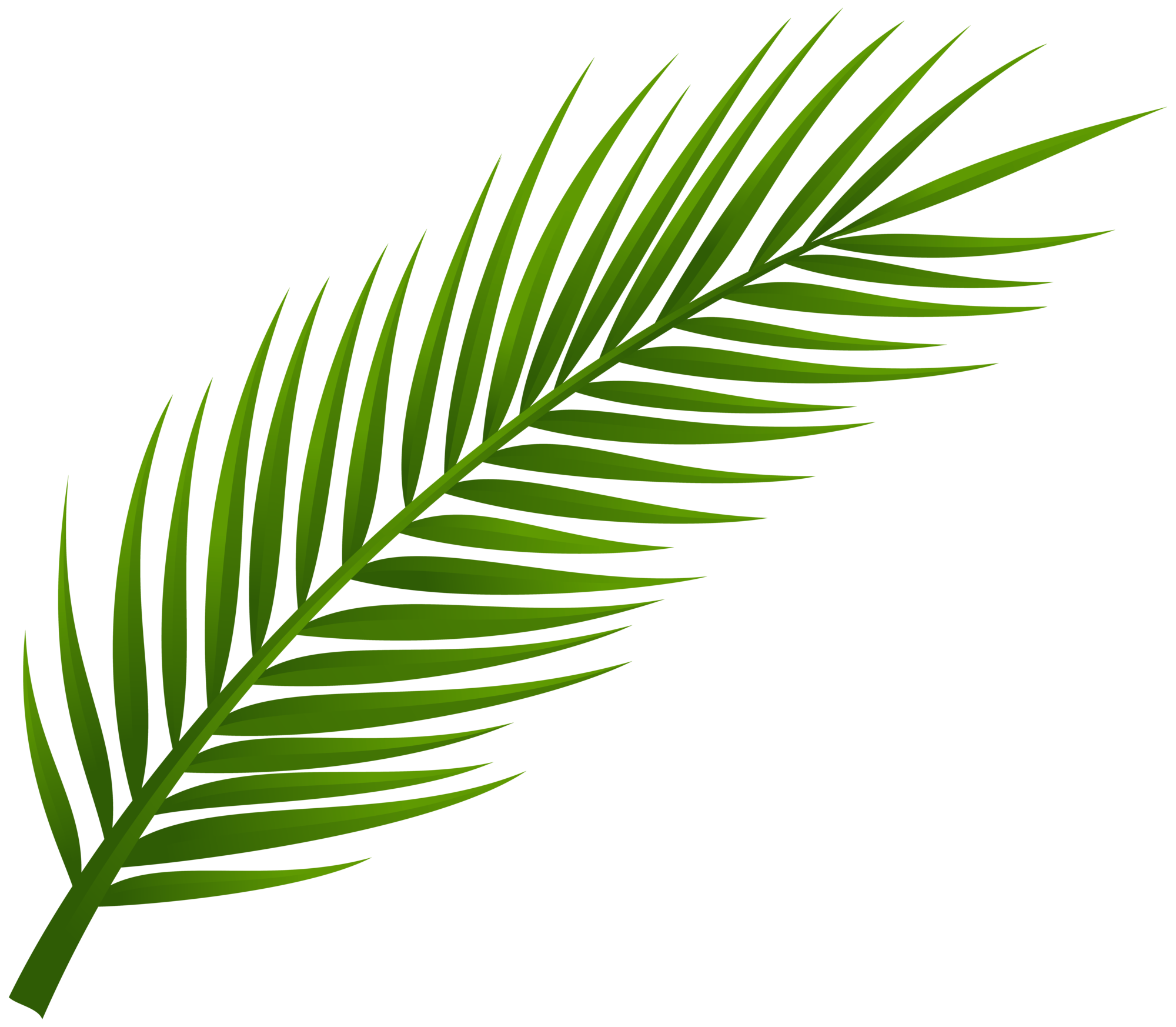 Palm clipart. Tree leaf png clip
