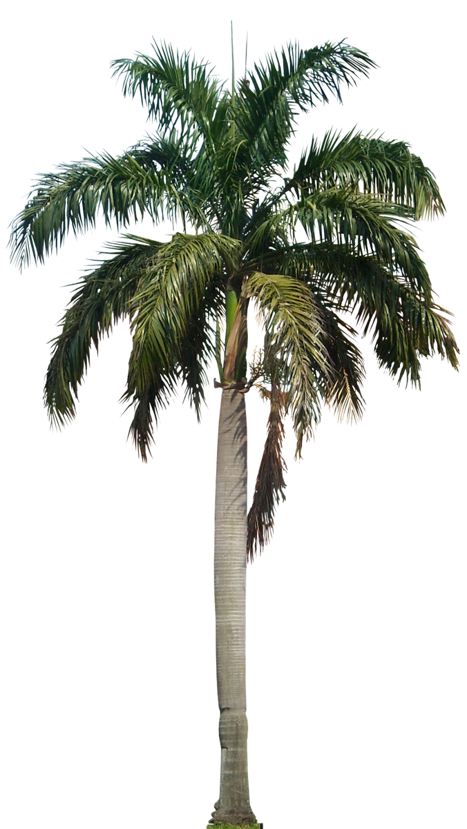 Image result for palm. Plants clipart beach