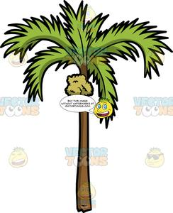 Palm clipart bunch. A fruit bearing tree
