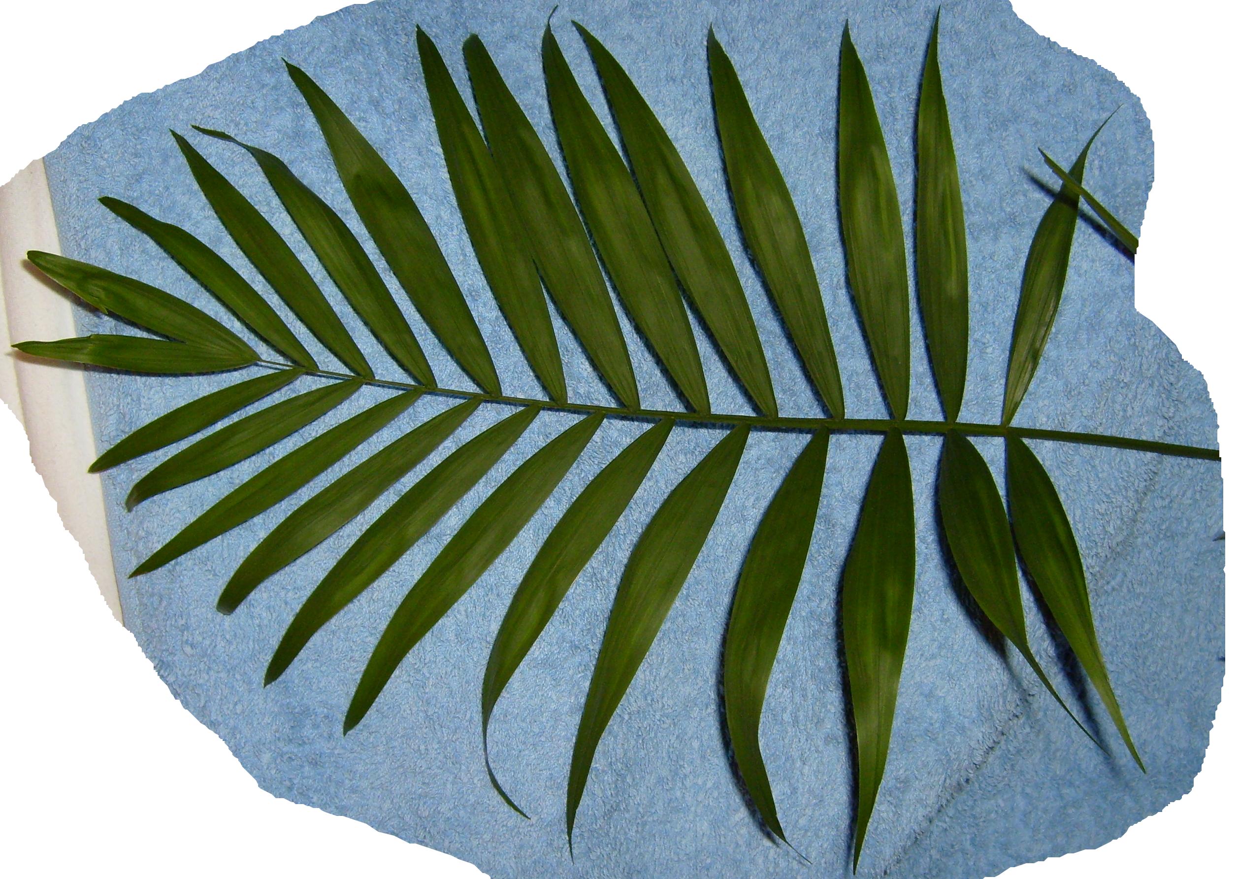 Palm clipart fern. Download text clip art