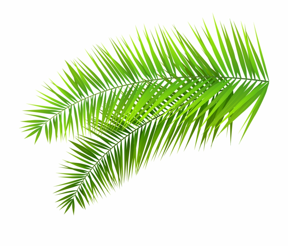 Palm clipart fern. Foliage leaf transparent background