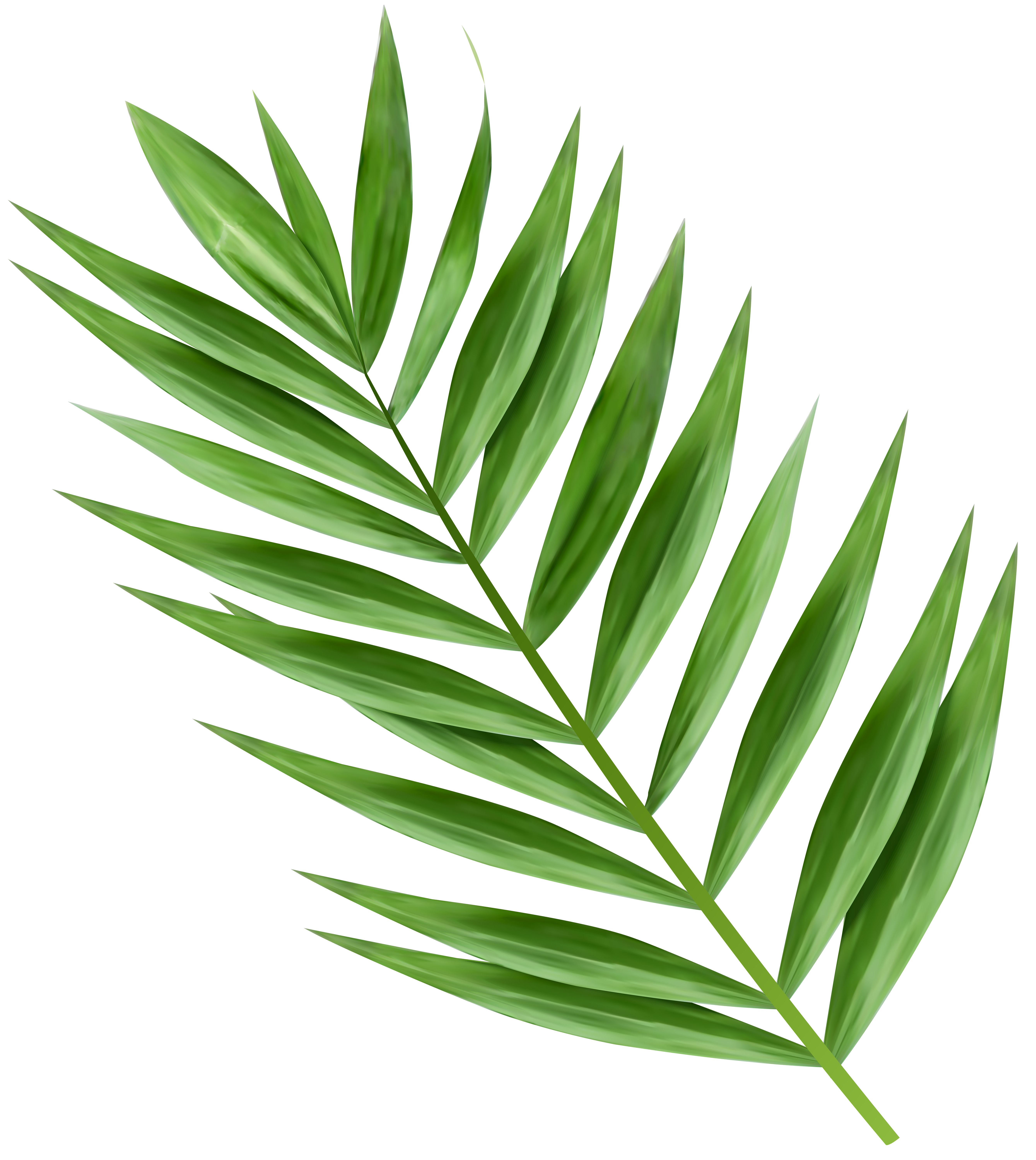 Transparent image gallery yopriceville. Palm clipart green branch