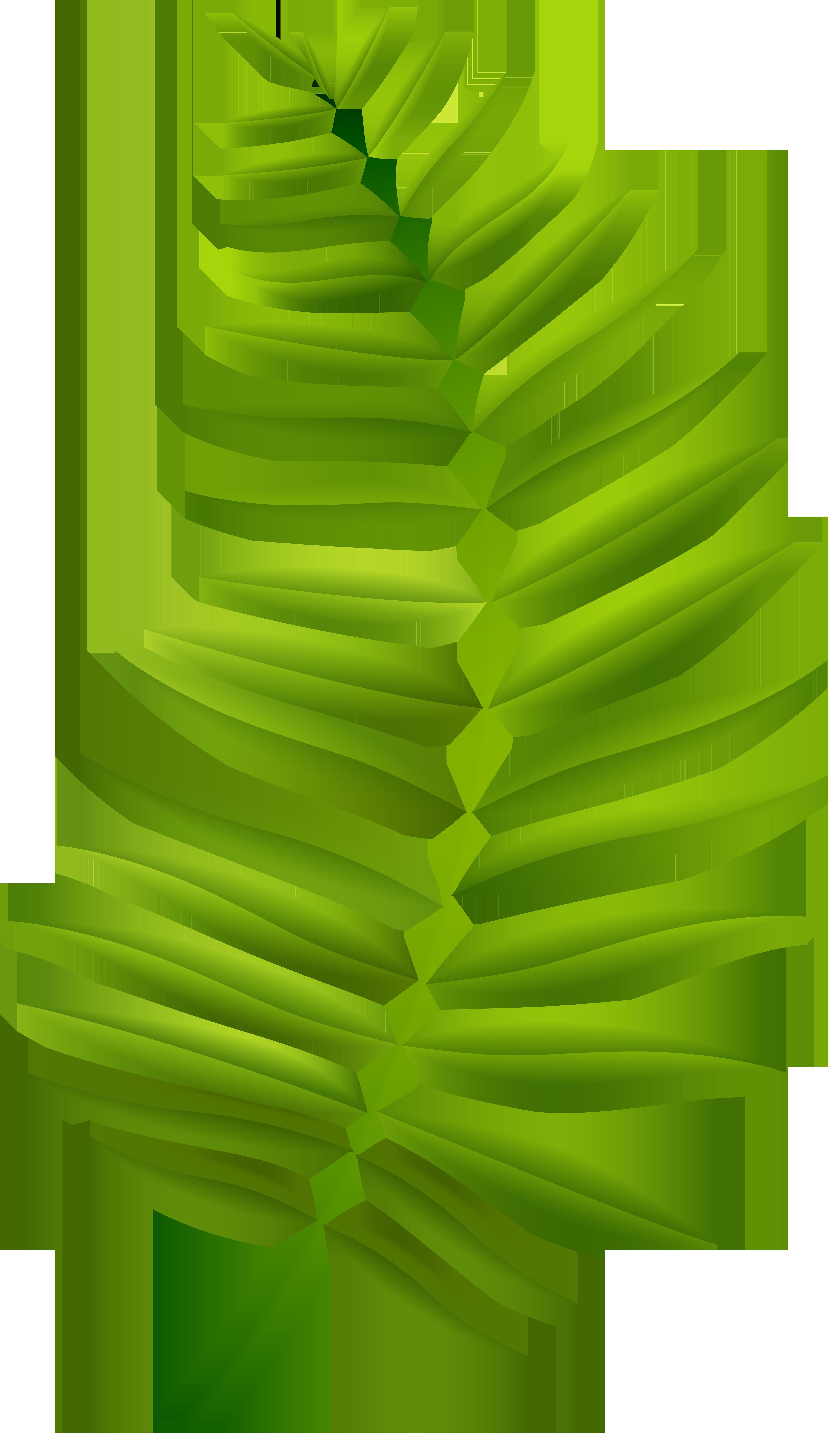Transparent clip art image. Palm clipart green branch