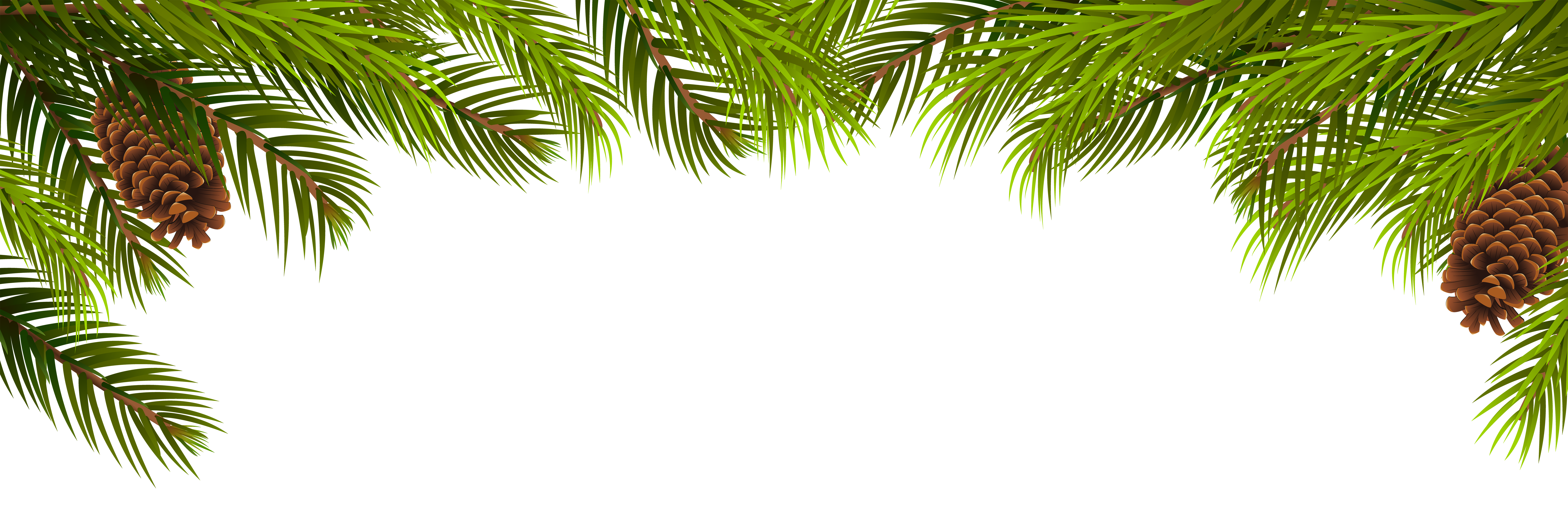 Palm clipart green branch. Pine branches and cones