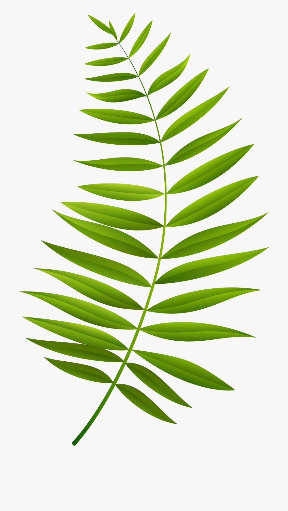 Palm clipart green branch. Transparent clip art imageu