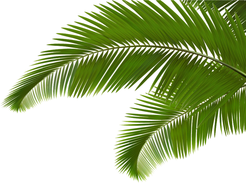 Arecaceae leaf frond clip. Palm clipart green branch