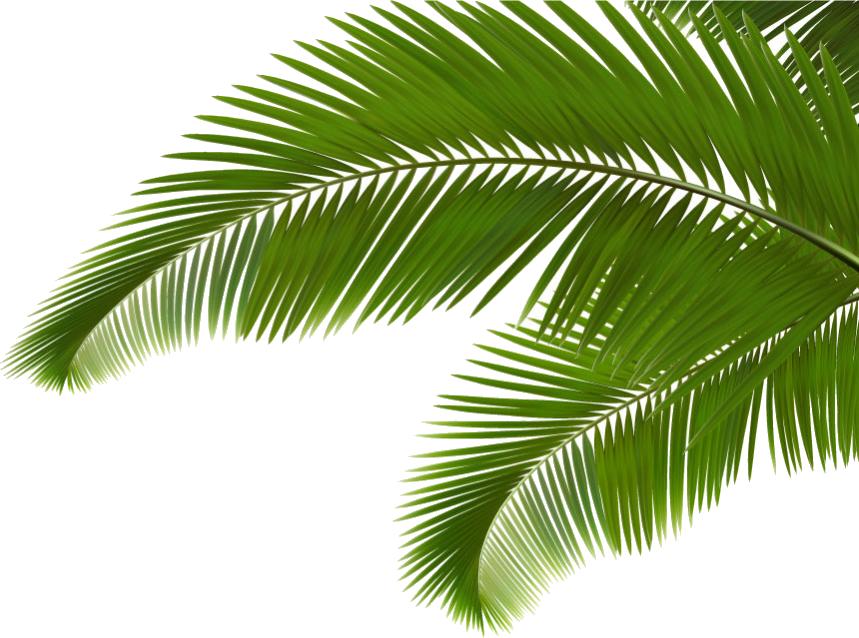 Palm green branch