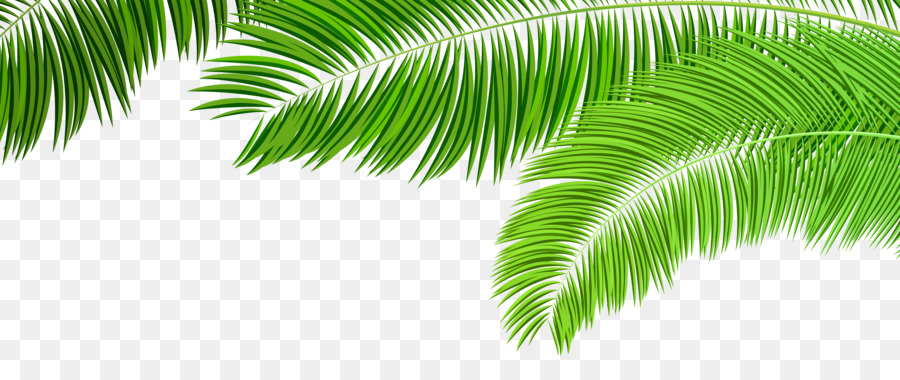 Palm clipart green branch. Arecaceae leaf manuscript clip