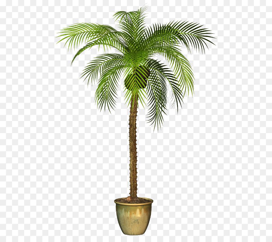 Palm clipart pal. Tree background plants flower