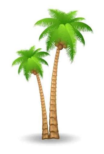 Cp paurb tree art. Palm clipart palm florida trees