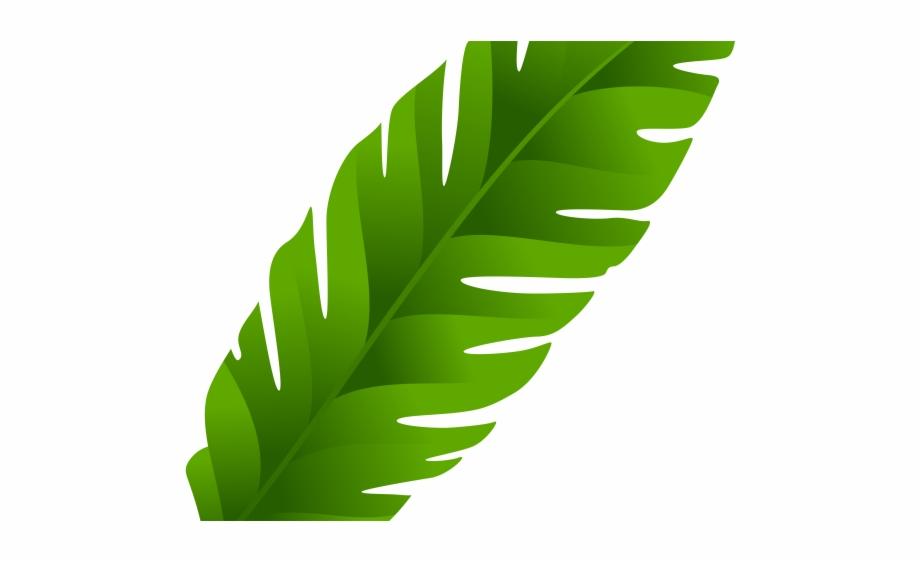 Palm clipart palm leaf. Coconut clear background transparent