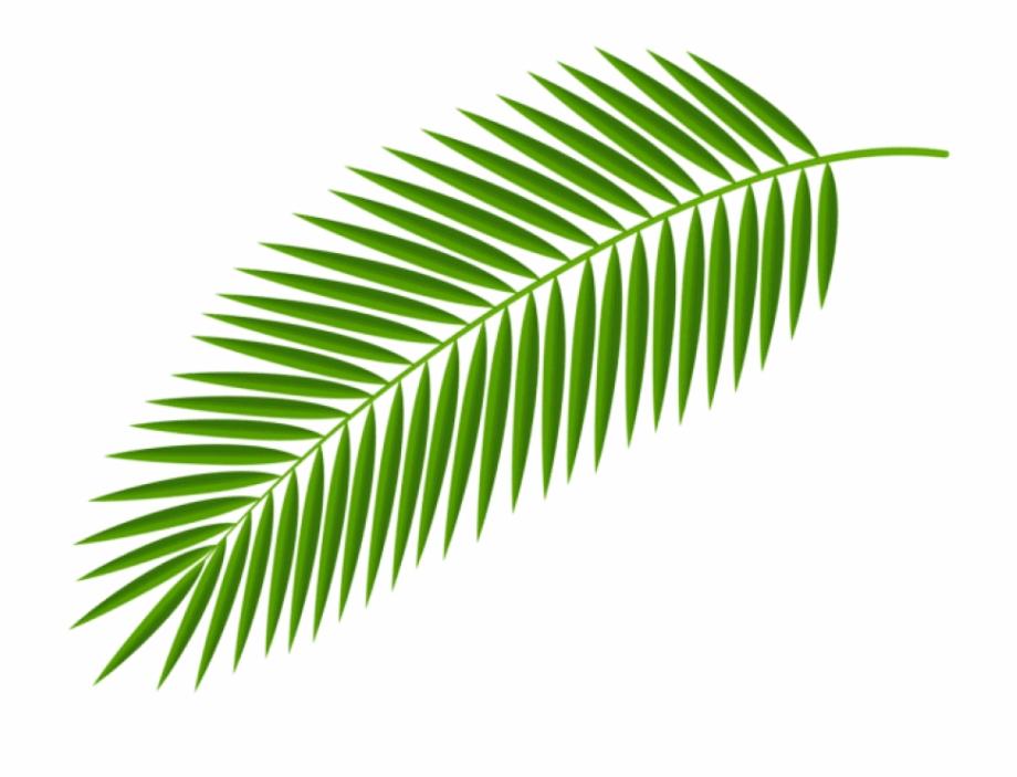 Palm clipart palm leaf. Trees png source transparent