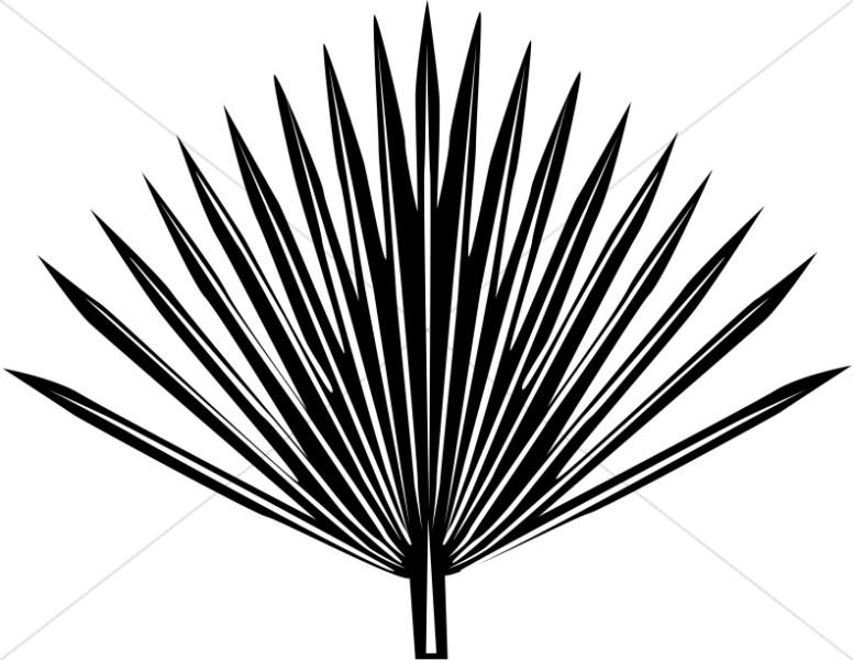 Palm clipart single. Radiating frond sunday